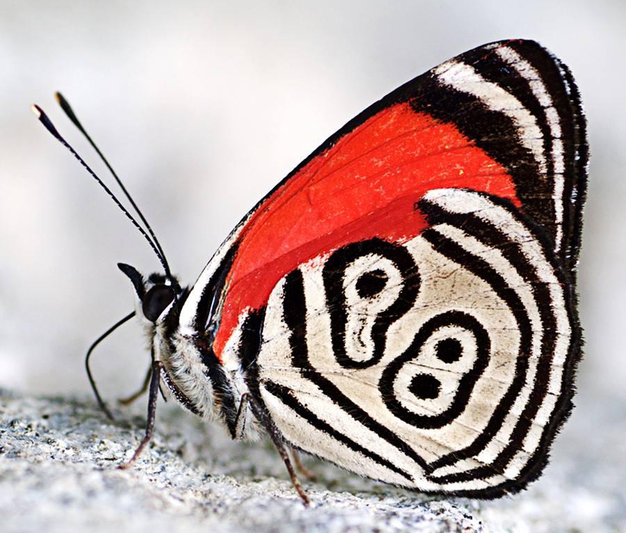 butterfly 98 2